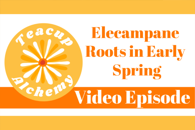 A Look at Elecampane Roots in Early Spring